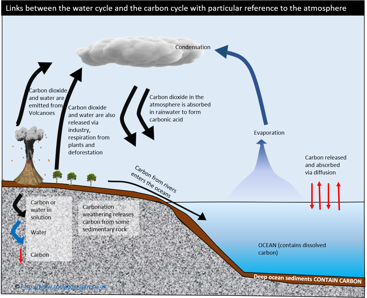 Water and carbon cycle links
