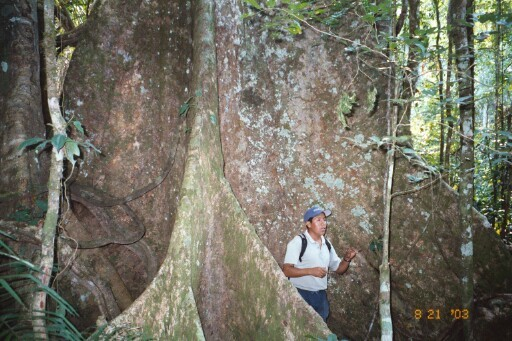 Buttress root and tourism guide