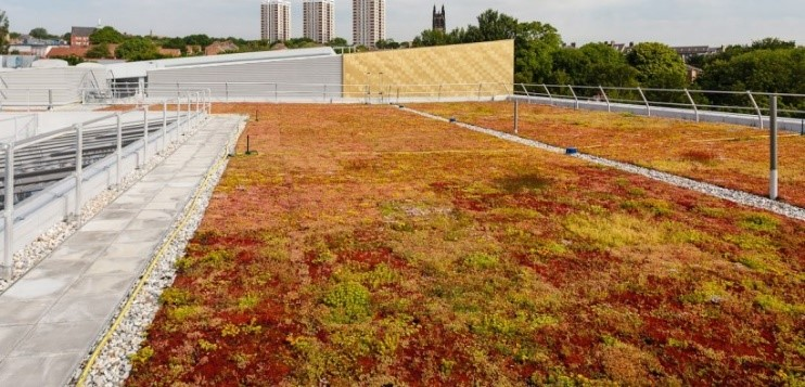 Newcastle college green roof